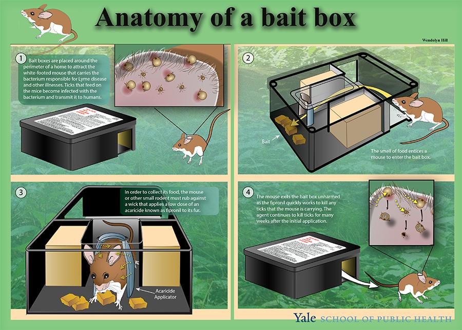Anatomy of the Bait Box